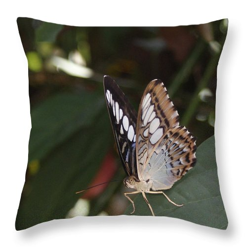 Butterfly Throw Pillow featuring the photograph Hints Of Blue by Shelley Jones