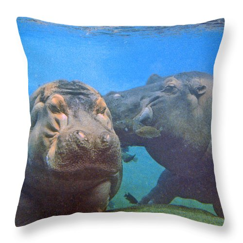 Animals Throw Pillow featuring the photograph Hippos In Love by Steve Karol