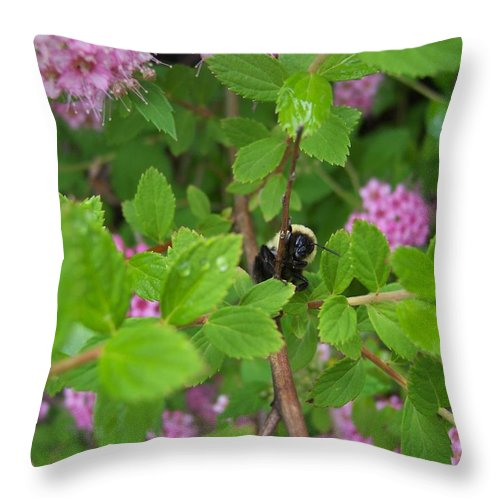Bumble Bee Garden Dew Flowers Nature Throw Pillow featuring the photograph His Good Side by Anna Villarreal Garbis