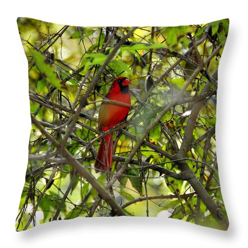 Red Throw Pillow featuring the photograph His Majesty by David Lee Thompson