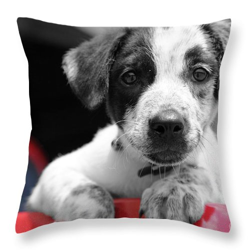 Dogs Throw Pillow featuring the photograph Hmmm by Amanda Barcon