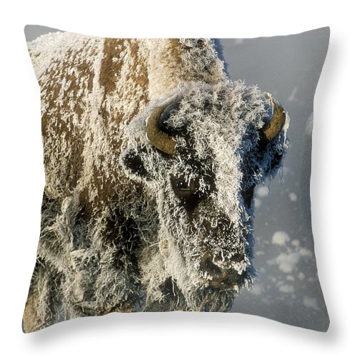 Bison Throw Pillow featuring the photograph Hoarfrosted Bison In Yellowstone by Sandra Bronstein
