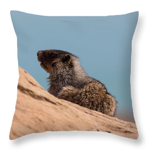 Throw Pillow featuring the photograph Hoary Marmot On Blue by J and j Imagery
