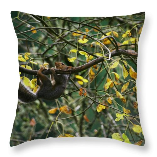 Eastern Gray Squirrel Throw Pillow featuring the photograph Hold On Baby by Teresa A Lang