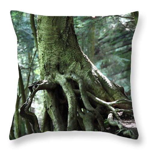 Trees Throw Pillow featuring the photograph Hold On To Me. by Amanda Barcon