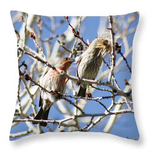 Home Throw Pillow featuring the photograph Home Hunters by Marilyn Hunt