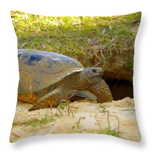 Gopher Tortoise Throw Pillow featuring the photograph Home Sweet Burrow by David Lee Thompson
