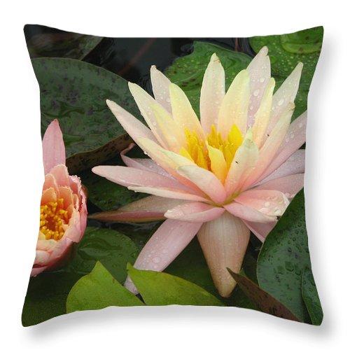 Lotus Throw Pillow featuring the photograph Honey Dew by David Dunham