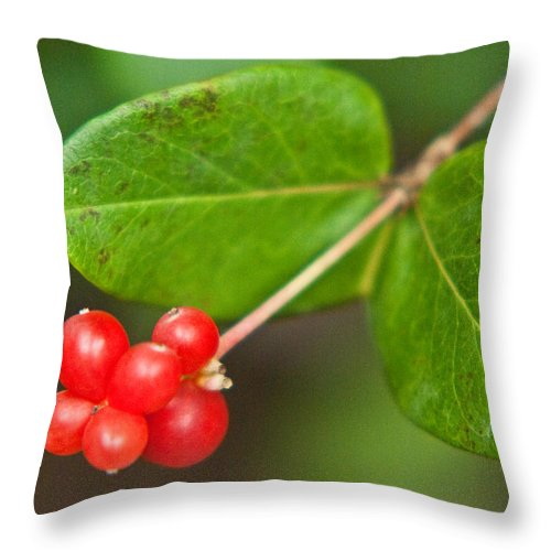 Honey Throw Pillow featuring the photograph Honey Suckle Berry Seeds by Douglas Barnett