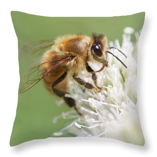 Apidae Throw Pillow featuring the photograph Honeybee on Rattlesnake Master by Jim Hughes