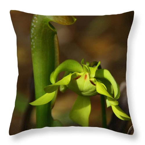 Hooded Pitcher Plant Throw Pillow featuring the photograph Hooded Pitcher Plant by Barbara Bowen