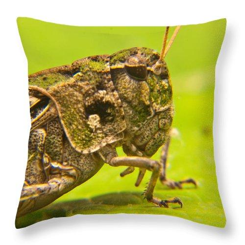 Grashopper Throw Pillow featuring the photograph Hopper Facial by Douglas Barnett