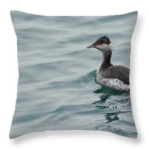 Grebe Throw Pillow featuring the photograph Horned Grebe by Charles Owens