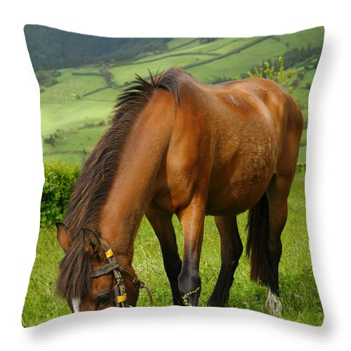Animals Throw Pillow featuring the photograph Horse Grazing by Gaspar Avila