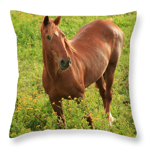 Animals Throw Pillow featuring the photograph Horse In A Field With Flowers by Gaspar Avila