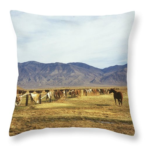Horse Throw Pillow featuring the photograph Horse In Eastern Sierras by Jim And Emily Bush