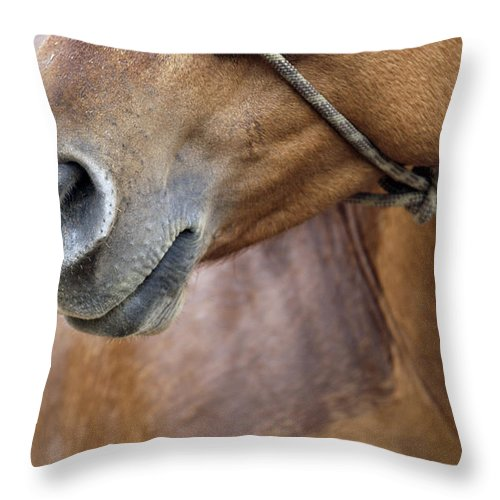 Equine Throw Pillow featuring the photograph Horse Of Course by Glennis Siverson