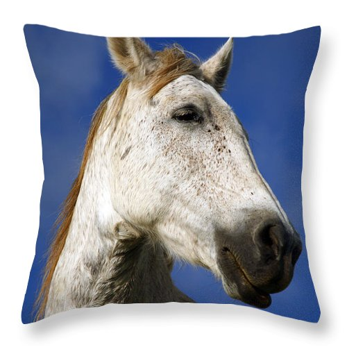 Animals Throw Pillow featuring the photograph Horse Portrait by Gaspar Avila