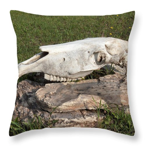 Horse Horses Spiritual Remembering Skull Spirits Ranch Herd Animals Throw Pillow featuring the photograph Horse Spirit 1 by Andrea Lawrence