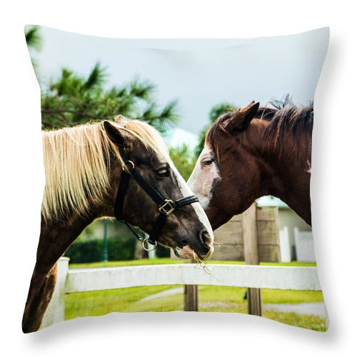 Horses Throw Pillow featuring the photograph Horse Whisperer by Mary Swann
