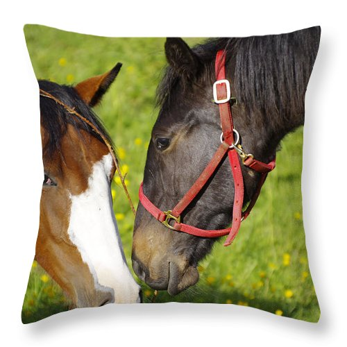 Horses Throw Pillow featuring the photograph Horses by Gary Hancock