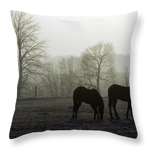 Horse Throw Pillow featuring the photograph Horses In Field by Steve Somerville