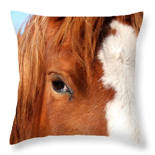 Horse Throw Pillow featuring the photograph Horse's Mane by Thomas Marchessault