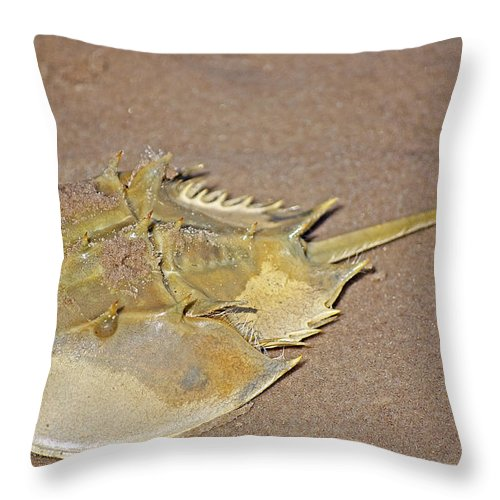 Crab Throw Pillow featuring the photograph Horseshoe Crab by Kenneth Albin