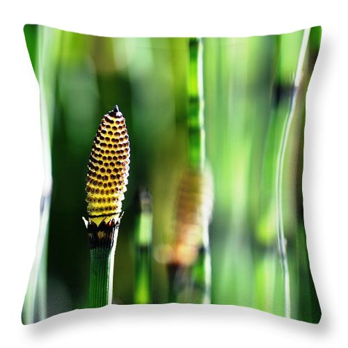 Bamboo Throw Pillow featuring the photograph Horsetail by Catherine Lau