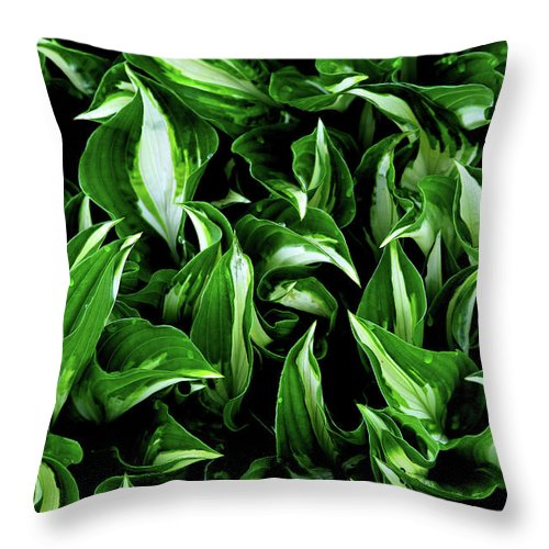 Plants Throw Pillow featuring the photograph Hosta Galore by Karol Livote