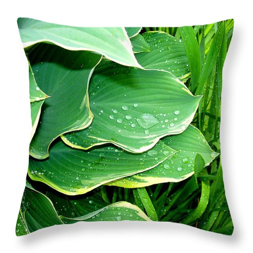 Hostas Throw Pillow featuring the photograph Hosta Leaves and Waterdrops by Nancy Mueller