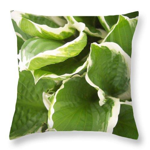 Hostas Leaves Foliage Green White Throw Pillow featuring the photograph Hostas 2 by Anna Villarreal Garbis
