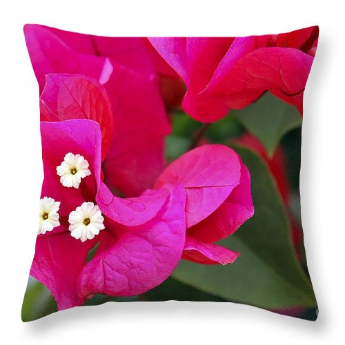 Flower Throw Pillow featuring the photograph Hot Pink Bougainvillea by Teresa Zieba