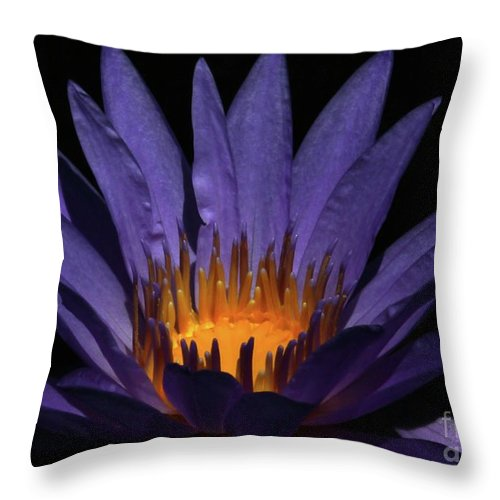 Water Lily Throw Pillow featuring the photograph Hot Purple Water Lily by Sabrina L Ryan