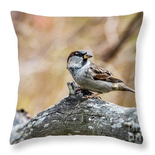 House Sparrow Throw Pillow featuring the photograph House Sparrow by Torbjorn Swenelius