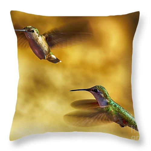 Digital Photography Throw Pillow featuring the photograph Hover by Chuck Lapinsky