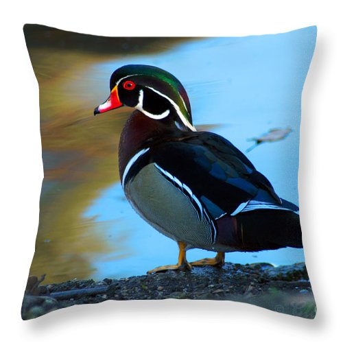 Clay Throw Pillow featuring the photograph How Much Wood Could A Wood Duck Chuck by Clayton Bruster