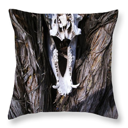 Throw Pillow featuring the photograph Howdy Javalina by Laurette Escobar