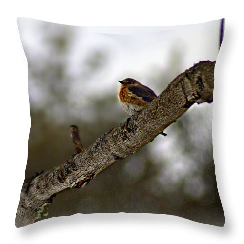 Cold Throw Pillow featuring the photograph Huddled Bluebird by Catherine Melvin