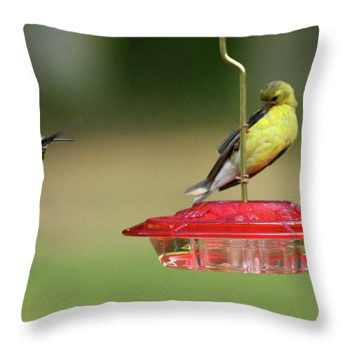 Bird Throw Pillow featuring the photograph Hummer Vs. Finch 1 by Lou Ford