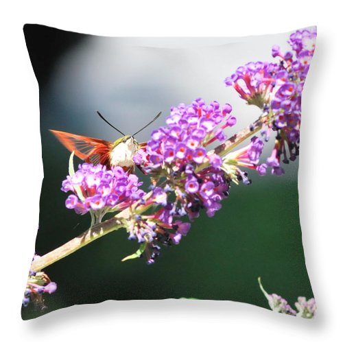 Humming Bird Moth Throw Pillow featuring the photograph Humming Bird Moth by Michelle DiGuardi