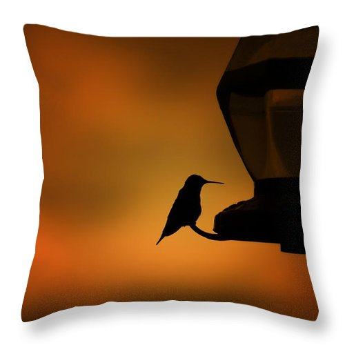 Hummingbird Throw Pillow featuring the photograph Hummingbird After The Storm by Al Mueller