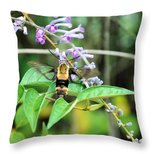 Floral Throw Pillow featuring the photograph Hummingbird Bee by Jan Amiss Photography