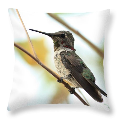 Hummingbird Throw Pillow featuring the photograph Hummingbird Between Branches by Carol Groenen
