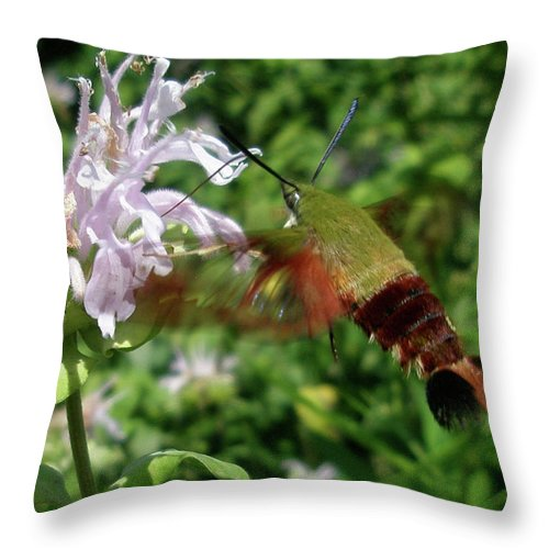 Moth Throw Pillow featuring the photograph Hummingbird Clear-wing Moth At Monarda by Mother Nature