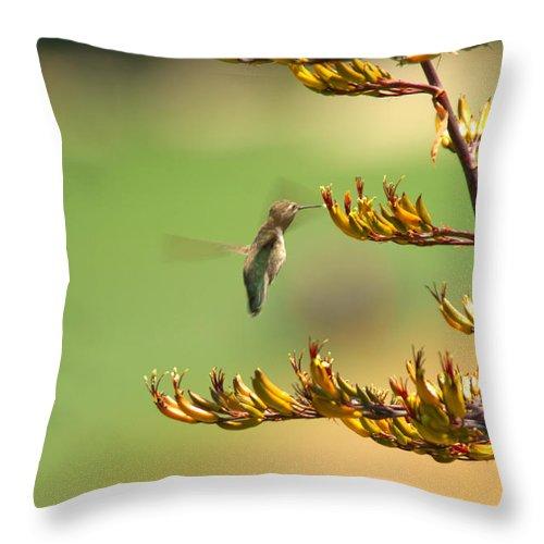 Hummingbird Bird Nature Nectar Plant Flower Botanical Throw Pillow featuring the photograph Hummingbird Drinking Nectar by Jill Reger