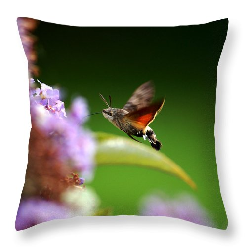 Hummingbird Hawk Moth Throw Pillow featuring the photograph Hummingbird Hawk Moth - Four by P Donovan