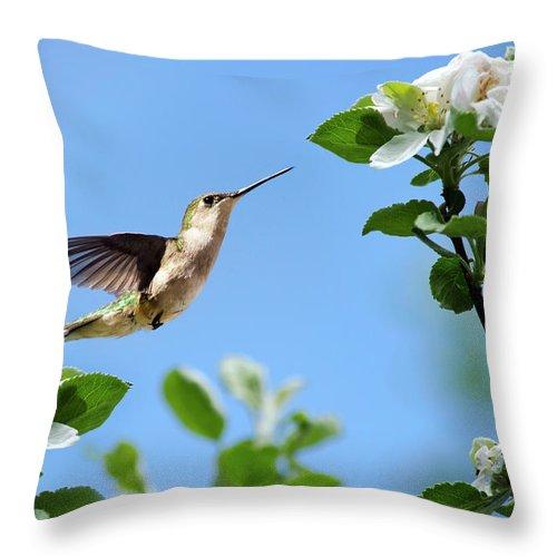 Hummingbird Throw Pillow featuring the photograph Hummingbird Springtime by Christina Rollo