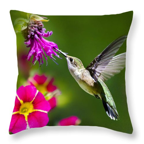 Hummingbird Throw Pillow featuring the photograph Hummingbird With Flower by Christina Rollo
