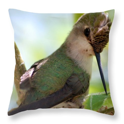 Hummingbird Throw Pillow featuring the photograph Hummingbird With Small Nest by Amy Fose